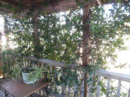 Click to enlarge image Shady spot for chillin' - Palm Cottage - Old town cottage near historic downtown Port Aransas. Two bedrooms, one bath, small laundry, quaint and cute patio area. Dog Friendly