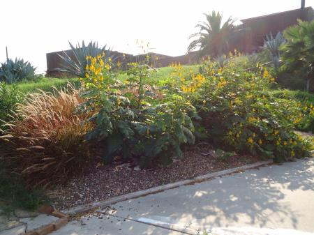 Click to enlarge image Lush gardens greet you in the parking area. - BeeGee's Wahoo Quarters - One bedroom, one bath, LARGE condo with laundry, tile floors, Dog Friendly. Walk to beach